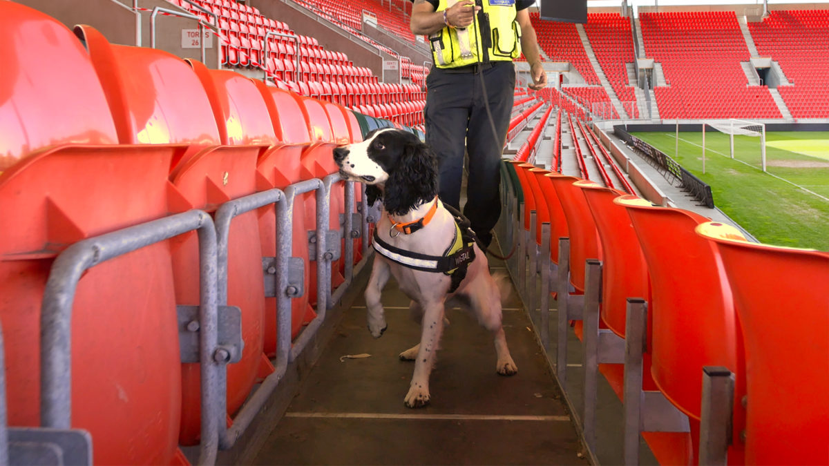 Explosives Detection Dog